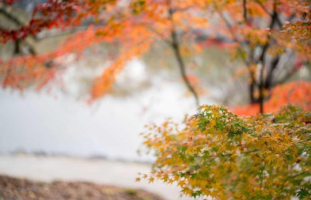 Seasonal scenery
